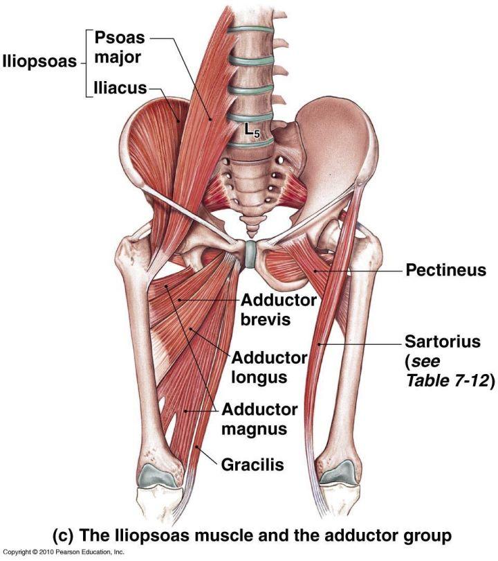 Hip Mobility